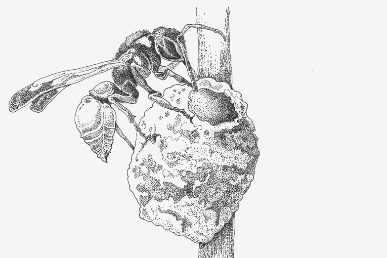 Illustration of a wasp and its nest.